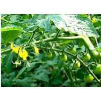 有机蔬菜批发价格高的原因有哪些?