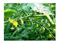浅谈有机蔬菜生产基地要求