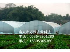 大棚施工  全钢架花梁拱棚   寿光市万禾农业