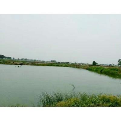 郑州黄河渔场鱼苗供应草鱼苗专业快速