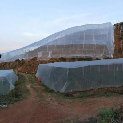 加厚加宽果树防虫网优质好网厂家直发规格齐全